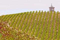 WEDDING CHAPELS and VINEYARDS (LOURENḉO Photography) Tags: vineyard wedding chapel grapes hills winery beautiful canon redwillowvineyard wine 5d 5diii