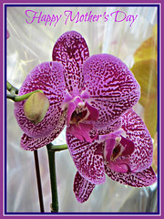 Happy Mother's Day (bigbrowneyez) Tags: purple gorgeous lovely happyothersday blossoms dedication tribute elegant elegance beautiful striking flickrfancy nature loving woderful natura art bright colourful rich whmsical delight delightful petals warm charming speckled