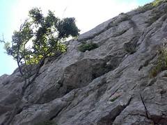 climbing@Krk (formilock) Tags: krk baska belovestene portafortuna climbing climb climbmore iloveclimbing hangbytherope klettern klifur rockclimbing felsklettern sportclimbing sportklettern croatia hrvatska hrvaška kroatien