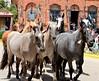 Tropilla de Caballos (José Luis Viedma) Tags: caballos gauchos tropilla horses
