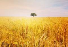 (Rôdrï) Tags: campo hierba paisaje naturaleza contrastes amarillo arbol cebada chinchon españa