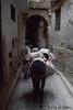 Donkeys and alleys of Fes (Morocco) (Nicolay Abril) Tags: فاس بولمان البالي المغرب أفريقيا، feselbali medinadefez medinadefeselbali medinadefezelbali medinadefes oldfes fèselbali fezbulmán fèsboulemane fez fès marruecos marocco morocco maroc marokko maghreb magreb africa afrika afrique