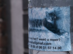 """Have you seen her?"" (Long Sleeper (busy!)) Tags: street poster flyer cat missingcat lostcat amsterdam holland thenetherlands lumixg425mmf17asph dmcgx1"