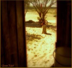 Juan. el poeta ermitaño.3 (susanamule) Tags: bicicleta arena gallo árbol lagunarocha uruguay susanamule sudamérica