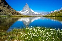 Matterhorn in the lake (chenjieyu) Tags: ice snow flower peak mountain lake reflection zermatt wallis 瑞士 ch matterhorn water landscape ngc nature wowl2 wowl3