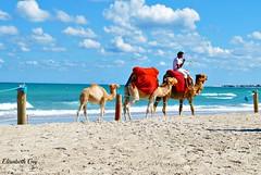Tunisia 200 (Elisabeth Gaj) Tags: elisabethgaj tunisia afryka travel animals people beach sea