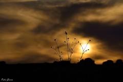 Spring sun (Peideluo) Tags: maravillosomundo minimalismo clouds sky sun