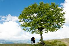 _MG_0343 (antocalv) Tags: bosco canfaito faggeto hiking montesanvicino trekking