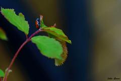 Something small in nature (Jotha Garcia) Tags: macro insect insecte insekt naturaleza nature natur nikkor5502000mmf4056 nikond3200 jothagarcia primavera printemps frühling spring mayo may mai 2017