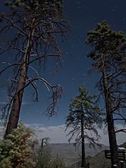 Pines and Stars. (isaacullah) Tags: