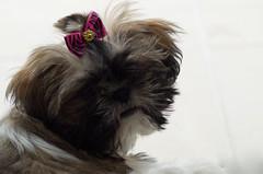 Ema is growing! (N. Iván Gil C.) Tags: dog animal pet mascota perro perrito cachorro bestfriend friend mejoramigo pentax k50