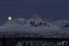 855_Panorama crp (Ed Boudreau) Tags: alaska alaskalandscape landscape landscapephotography winter winterscene winterscape denali mtdenali mtmckinley denalirange denalistatepark moon fullmoon wintermoon moonoverdenali snow mountains alaskamountains mountainrange usa