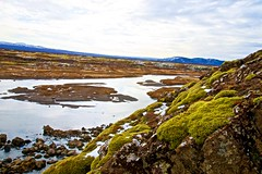 Thingvellir National Park (Herculeus.) Tags: 2017 april basalt bouldersstonerocks clouds country europe faultline flowersplants geology ice iceland lake lakethingvallavatniceland landscape landscapes lavaflow moss mountains outdoor outdoors outside parliamentaryplains people snow spring tectonicplates thingvellirnationalpark plants