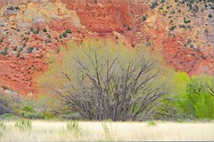 GEORGIA ON MY MIND (Irene2727) Tags: ghostranch abiqiui newmexico colors nature tree rock grass flora