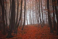 im Kellerwald (NPPhotographie) Tags: nature art creative oberberg npp tree wood forest fog mist dust magic autumn fall bestcapturesao elitegalleryaoi