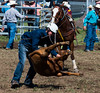 Is-this-cruel_DSC4358 (Mel Gray) Tags: dungogrodeo dungogrodeo2017 dungog newcastle hunterregion annualevent eastersaturday melgrayphotography cowboys cowgirls equestrianevents roping