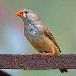 Bird and It's Snack ( 小鸟和点心 ) thumbnail