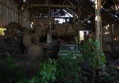 DSC_4302 (Foto-Runner) Tags: urvbex lost decay abandonné épaves car voitures ferme
