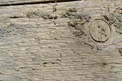 texture (walmarc04) Tags: texture wood lemn cracked crack
