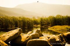 ave al vuelo, montañas entre nubes y agua (rosatifamadelrio) Tags: fave30