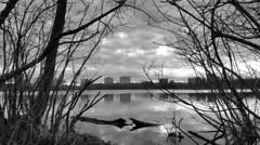 city over Mud Lake (thomas.erskine) Tags: 20170428 064938rgbrotdecrgbr 2017 apr spring ottawa ontario morning bw mud lake skyline