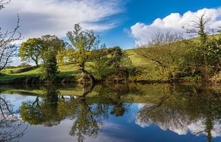 Woodland Pond...