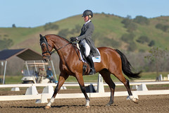 More Mackenna (Tackshots) Tags: eventing horsetrials 3star cic3 cic dressage pasorobles california riding rider horse