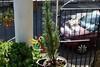 126 (Cielo Diluido) Tags: patio lirquen manualidad decoración arbusto d3300 nikon
