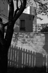 Jeux d'ombres (Fontenay-sous-Bois Officiel FRANCE) Tags: fontenay fontenaysousbois regionparisienne valdemarne iledefrance 94 94120 fsb france canon canong1x powershot ombre shadow reflet reflect reflection window windows fenêtre fenetres nb bw lines lignes outside extérieur banlieue immeuble maison house building arbre tree architecture perspective redoute