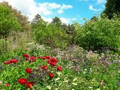 Parc floral Paris (frecari) Tags: parc paris iledefrance jardin france nature fleurs flowers