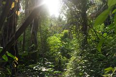Indonesia (slow paths images) Tags: indonesia asia sulawesi togianislands forest jungle trees green tropical nature lush vegetation light sunshine remote isolated wild trekking travel kadidiri island