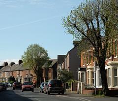 Buildings of Carlisle: suburban terrace (Allan Rostron) Tags: suburbs carlisle cumbria terraced houses streets spring terracedhouses housing