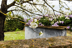Giardino giapponese (gianKE) Tags: japangarden certaldo