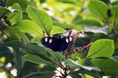Planted Butterfly