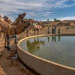 Thirsty camels! thumbnail