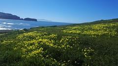Marin Headlands (cirving1226) Tags: marin headlands wildflowers ocean hiking spring