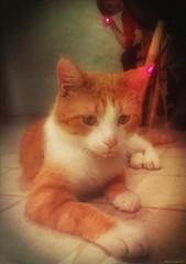 Jean-Michel est un chat rayonnant