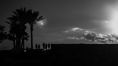 * (Timos L) Tags: monochrome blackandwhite againstthelight sunset silouette palm trees dock old town medieval city jbeil byblos lebanon middleeast mediterranean sea urban landscape olympus omd em5ii 124028 timosl flickr explore explored