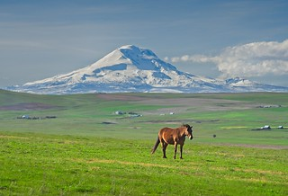 Mt Adams and Horse 448 C
