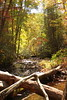 Focused on The River (stevenvan4) Tags: river water trees nature sticks forest woods