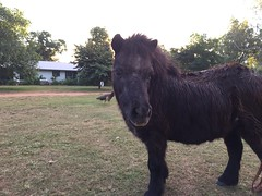 Mimi the Pony (freelancing god) Tags: railscamp northernterritory mountbundystation railscamp21