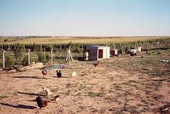 Şeref'in çiftliği