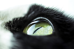 Macro Monday - Eyes (AdaMoorePhotography) Tags: cat eyes eye nikon d7200 105mm 105mmf28 macro macromonday macromondays black white mammal