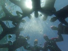 G0138150 (Visit Pilar de la Horadada) Tags: swimmers meeting point hibernismare swim natación nadar milpalmeras pilardelahoradada alicante costablanca vegabaja comunidadvalenciana quedada beach strand swimm