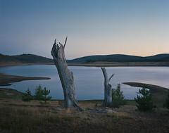 (roundtheplace) Tags: landscape landscapephotography lowlight longexposure dusk mediumformat pentax67 portra portra160 australia australianlandscape analogphotography australianbush trees lake snowyhydro snowymountains