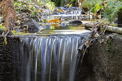 Tieve Tara 2017-05-06 (5D_32A8469) (ajhaysom) Tags: tievetara mtmacedon gardens autumn waterfall canoneos5dmkiii canon24105l melbourne australia