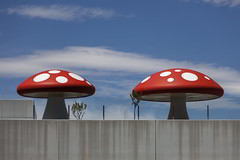 Madrid. 2014. (Jose_Pérez) Tags: color setas hospital contraste mushrooms madrid contrast