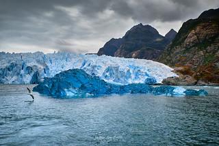 El vuelo de la gaviota - PN. Laguna San Rafael (Patagonia - Chile)