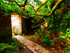 The Lost Gardens of Heligan, Mevagissey, Cornwall (photphobia) Tags: thelostgardensofheligan heligan cornwall uk mevagissey garden gardens trees plants oldwivestale green summer summersday holiday attraction outdoor outside serene autumn tree forest wood woods farm