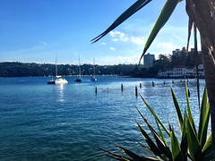 Our mooring in Manly. A bit of swell, but worth it.